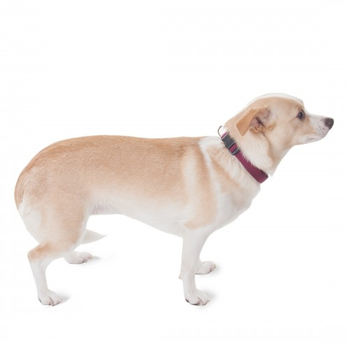 10in - 16in Adjustable Collar Burgundy, 10 - 45 lbs Dog By Majestic Pet Products